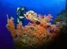 underwater1_16