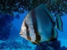 underwater1_17