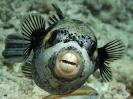 underwater1_1