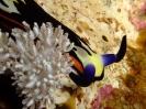 underwater1_21