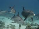 underwater1_25