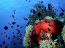 underwater1_28