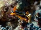 underwater1_32