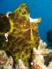 underwater1_42