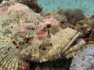 underwater1_45