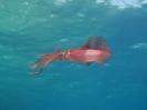 underwater1_46