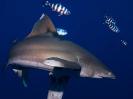 underwater1_65
