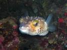 underwater1_66