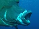 underwater1_74