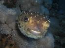underwater1_79