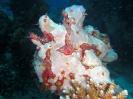 underwater1_81