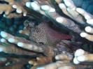 underwater1_82