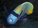 underwater1_85