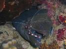 underwater1_86