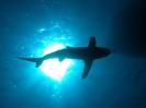 underwater1_90