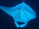 underwater1_91