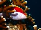 underwater1_95