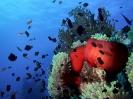 unterwasser_28