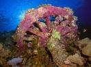 unterwasser_49