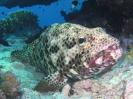 unterwasser_65
