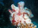 unterwasser_69