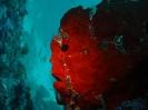 unterwasser_81