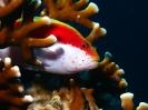 unterwasser_83